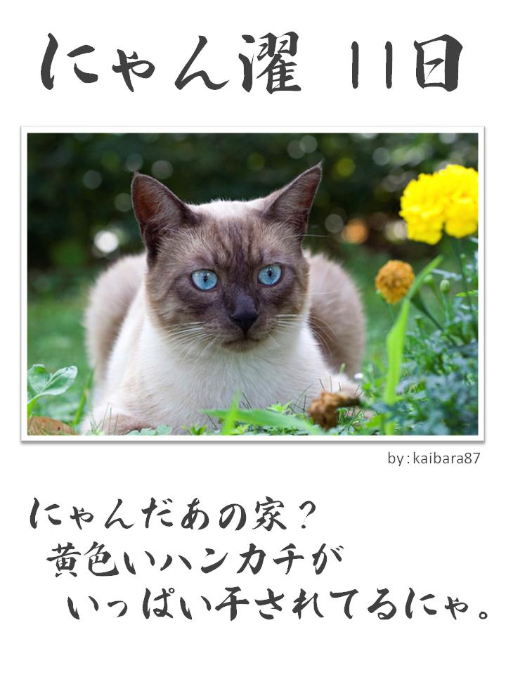 にゃん濯(にゃんたく)11日