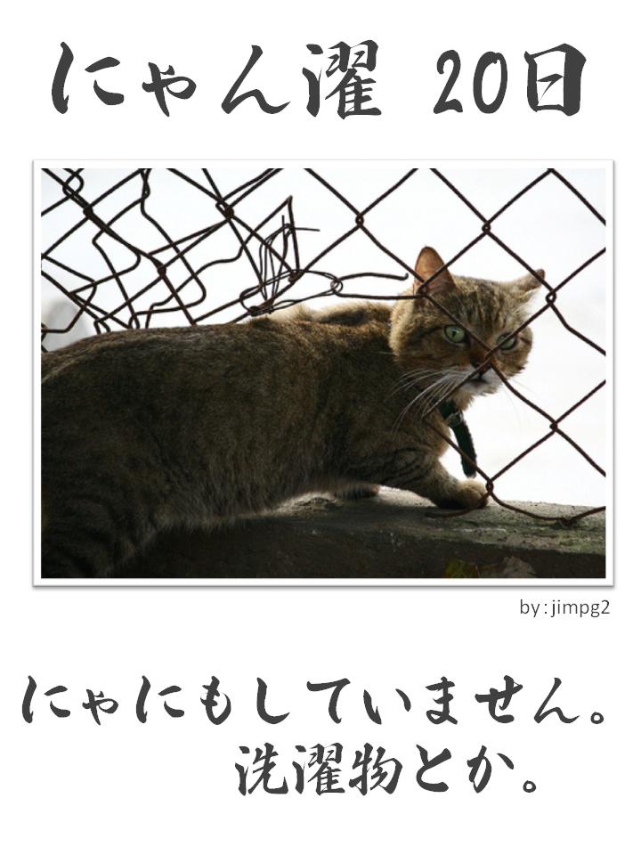 にゃん濯(にゃんたく)20日