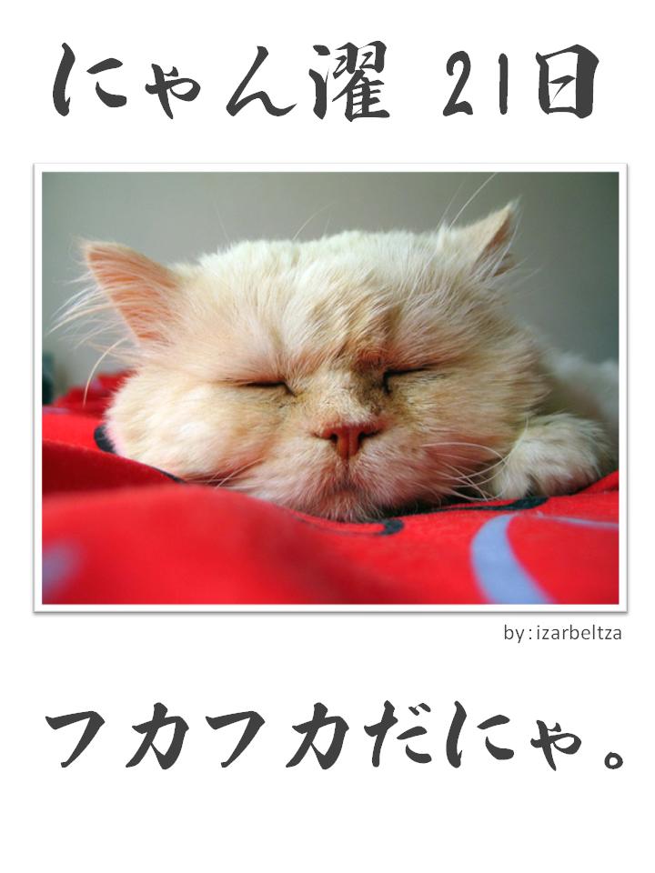 にゃん濯(にゃんたく)21日