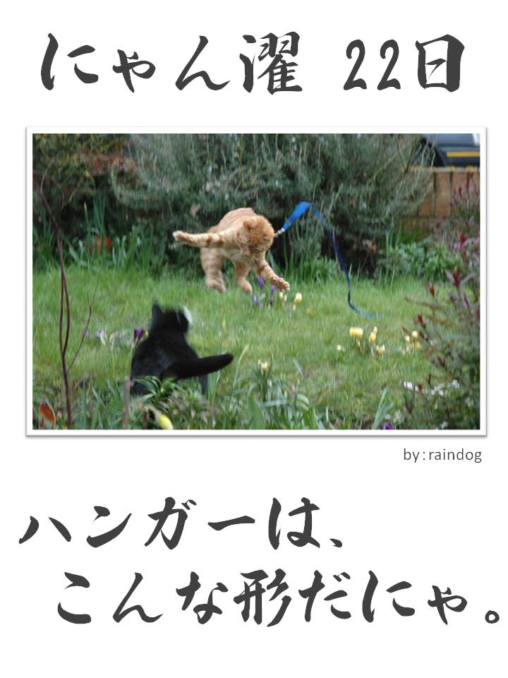 にゃん濯(にゃんたく)22日