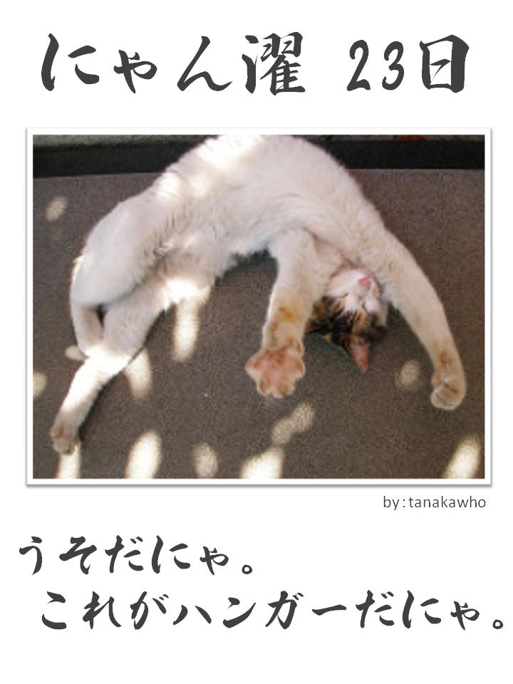 にゃん濯(にゃんたく)23日