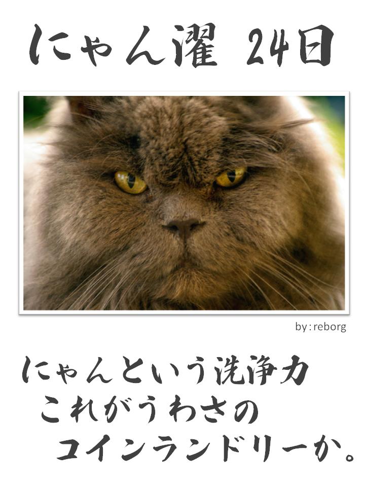 にゃん濯(にゃんたく)24日