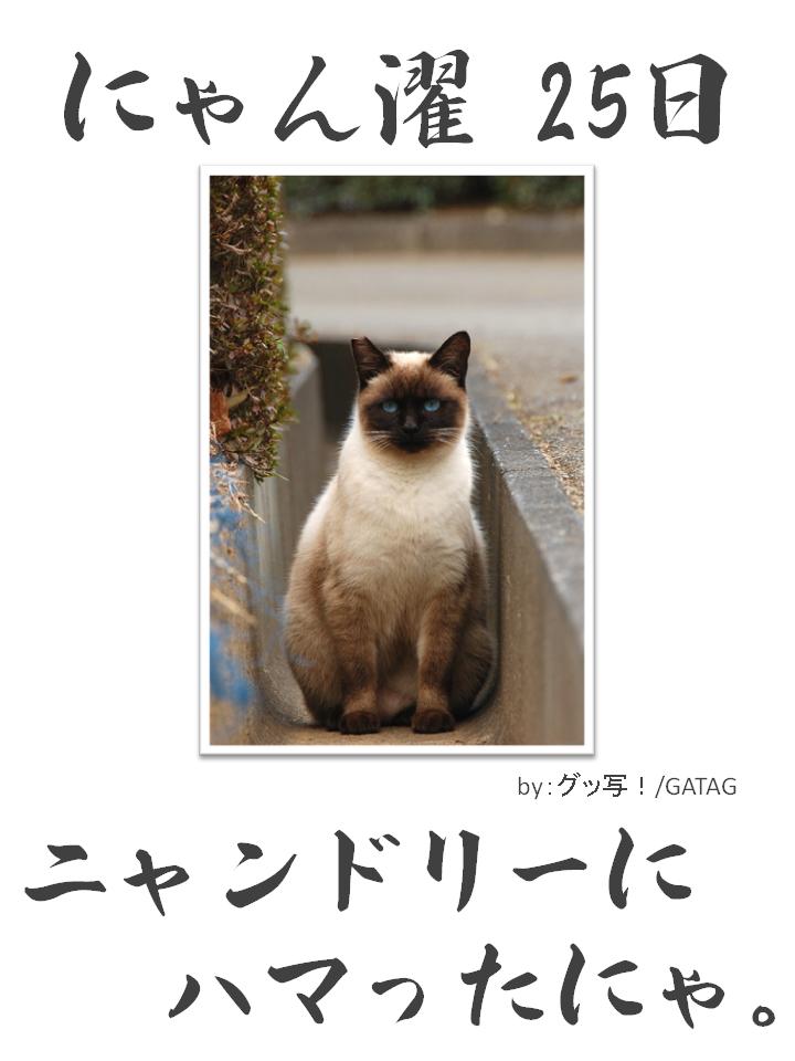 にゃん濯(にゃんたく)25日