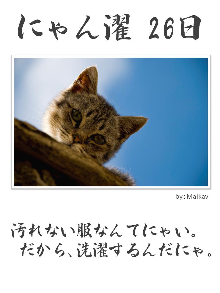 にゃん濯(にゃんたく)26日