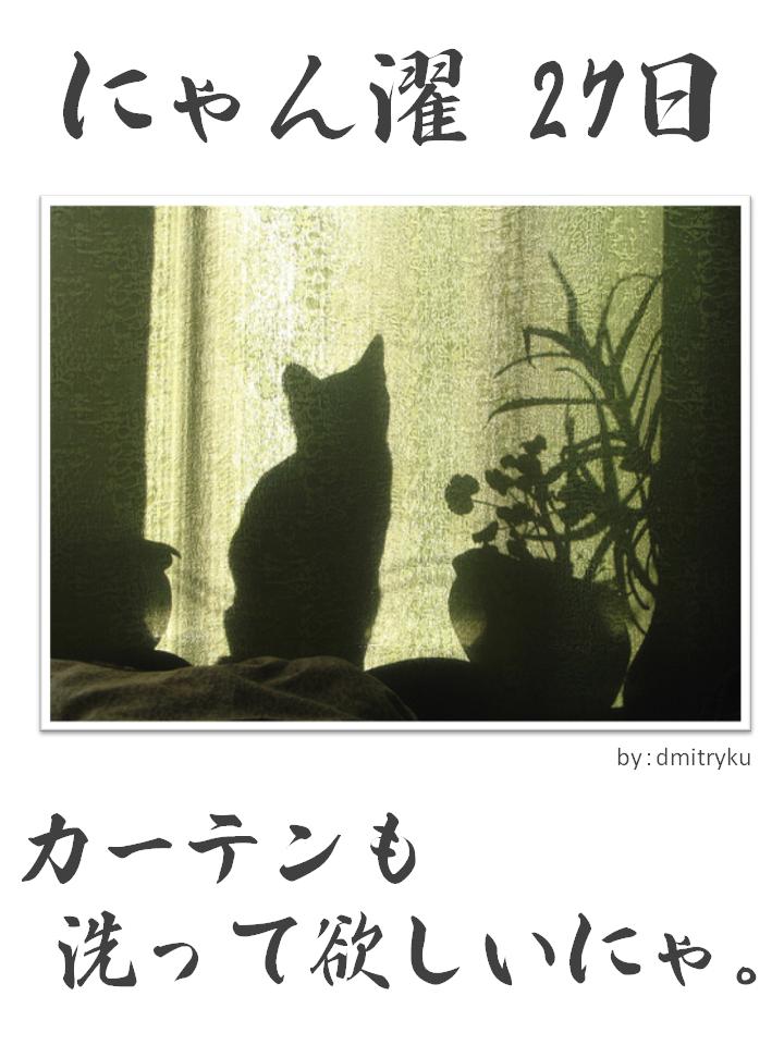 にゃん濯(にゃんたく)27日