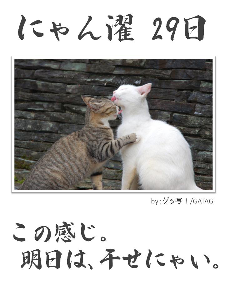 にゃん濯(にゃんたく)29日