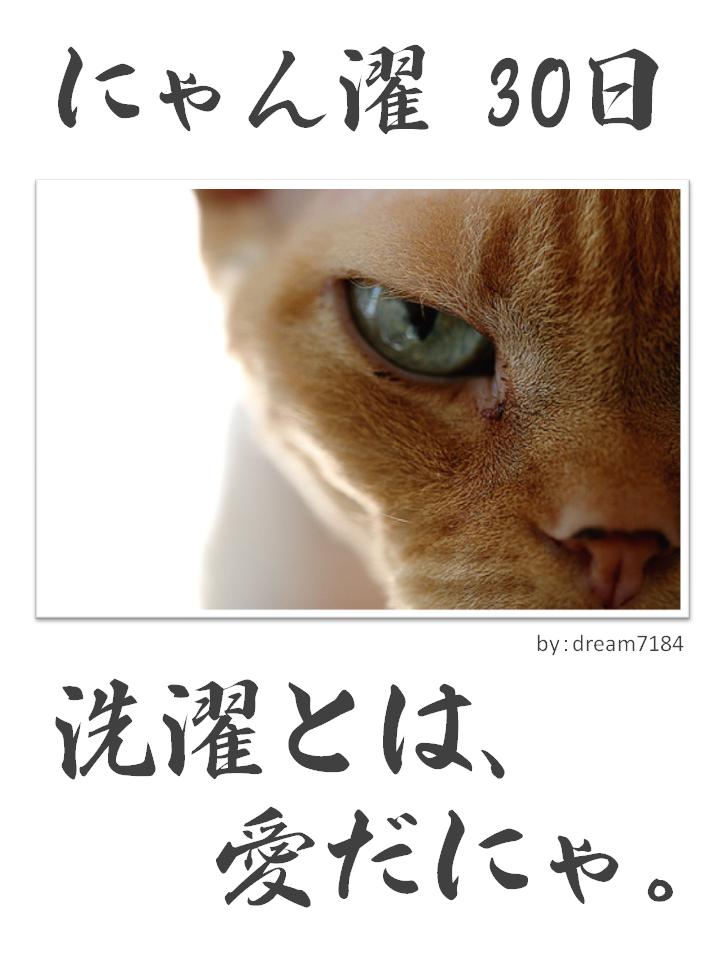 にゃん濯(にゃんたく)30日