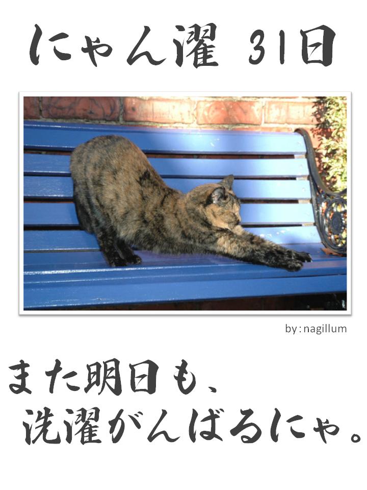 にゃん濯(にゃんたく)31日