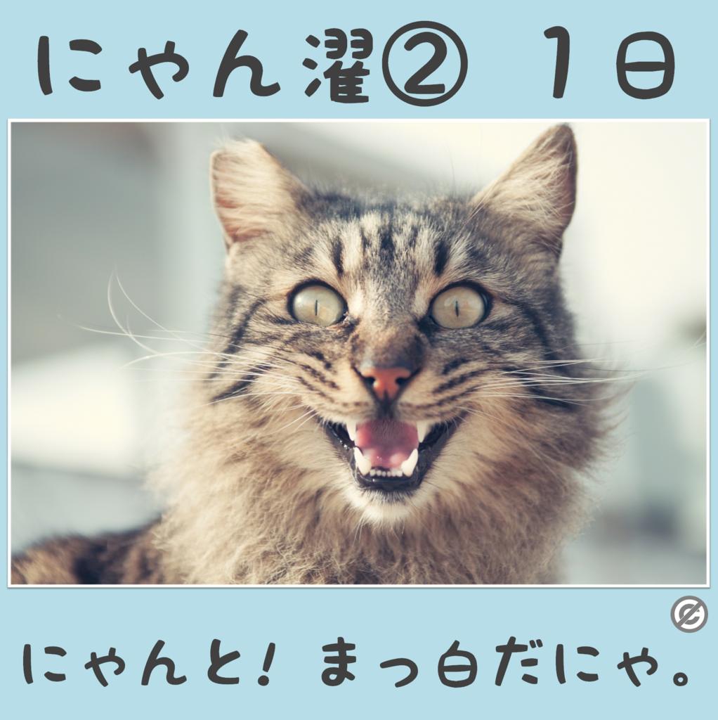にゃん濯②(にゃんたく)1日