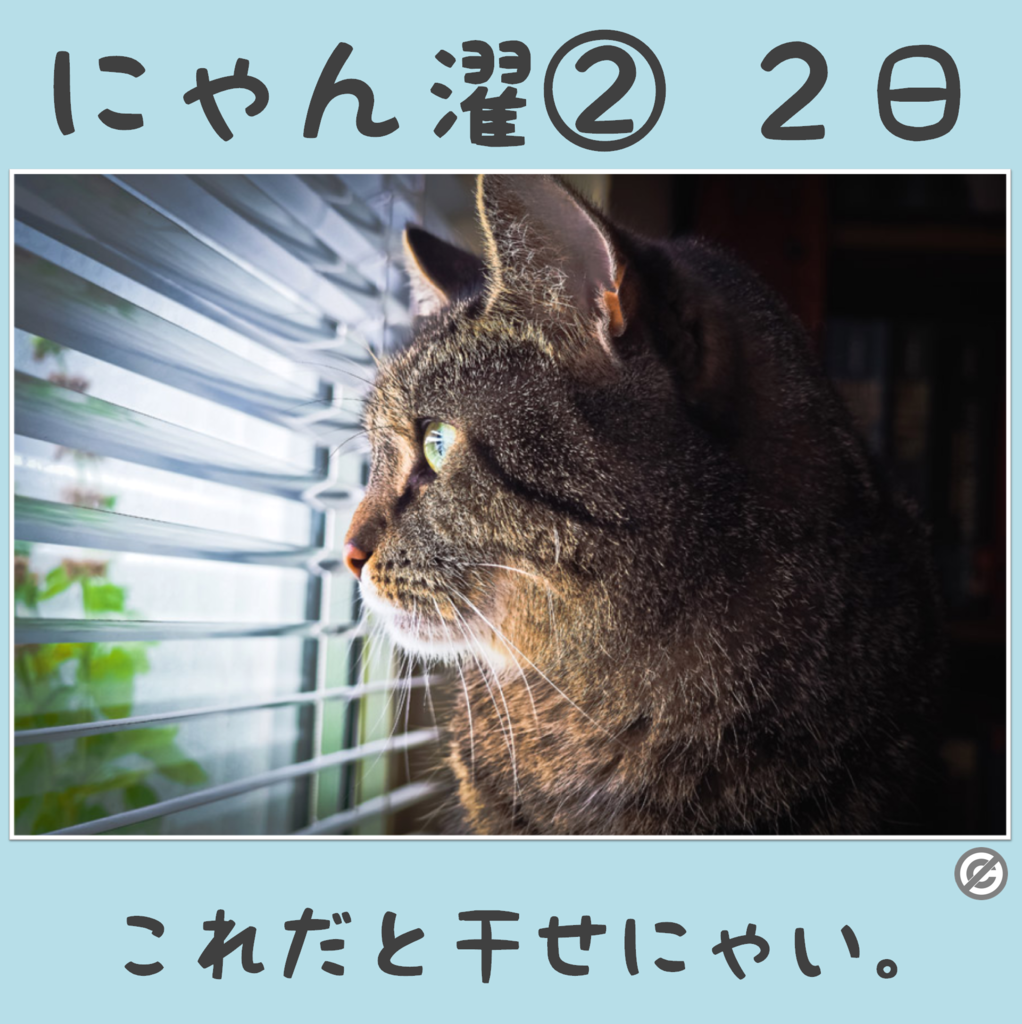 にゃん濯②(にゃんたく)2日