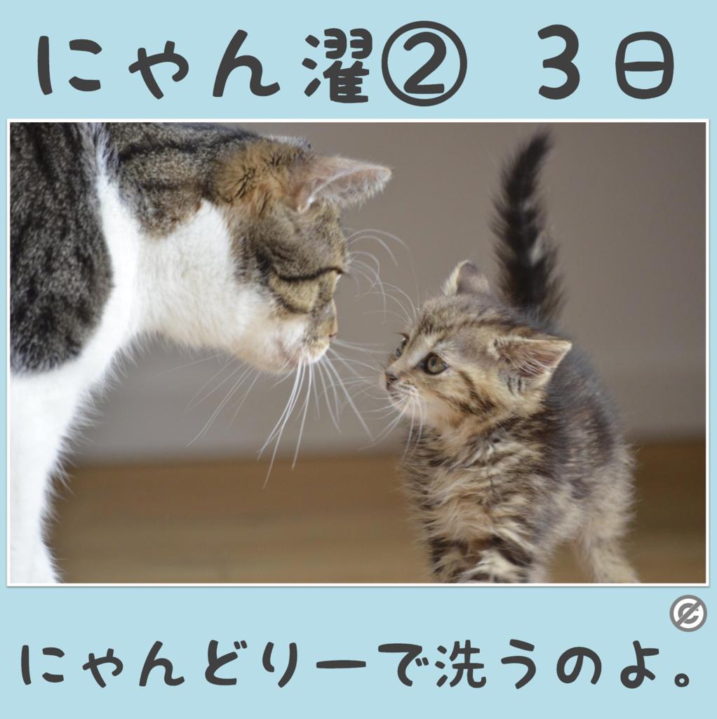 にゃん濯②(にゃんたく)3日