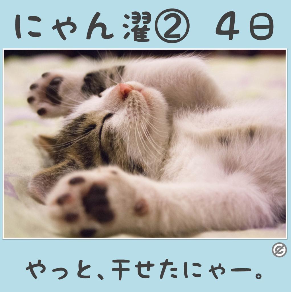 にゃん濯②(にゃんたく)4日