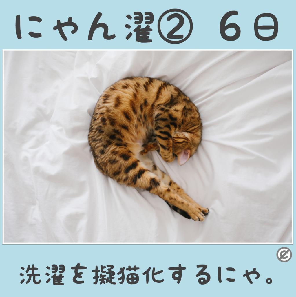 にゃん濯②(にゃんたく)6日