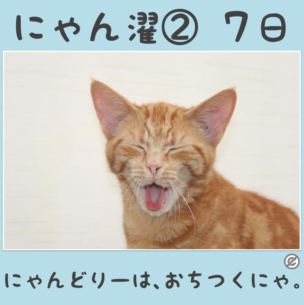 にゃん濯②(にゃんたく)7日