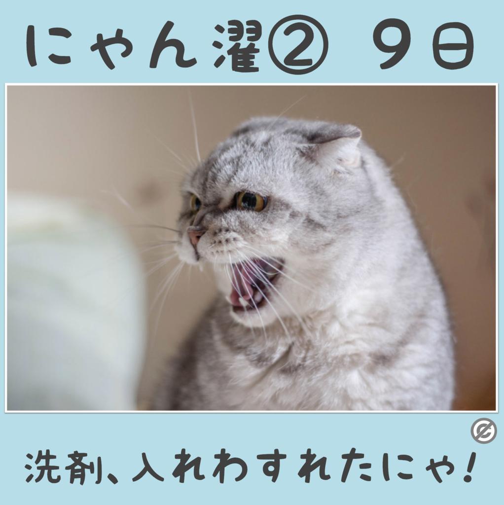 にゃん濯②(にゃんたく)9日
