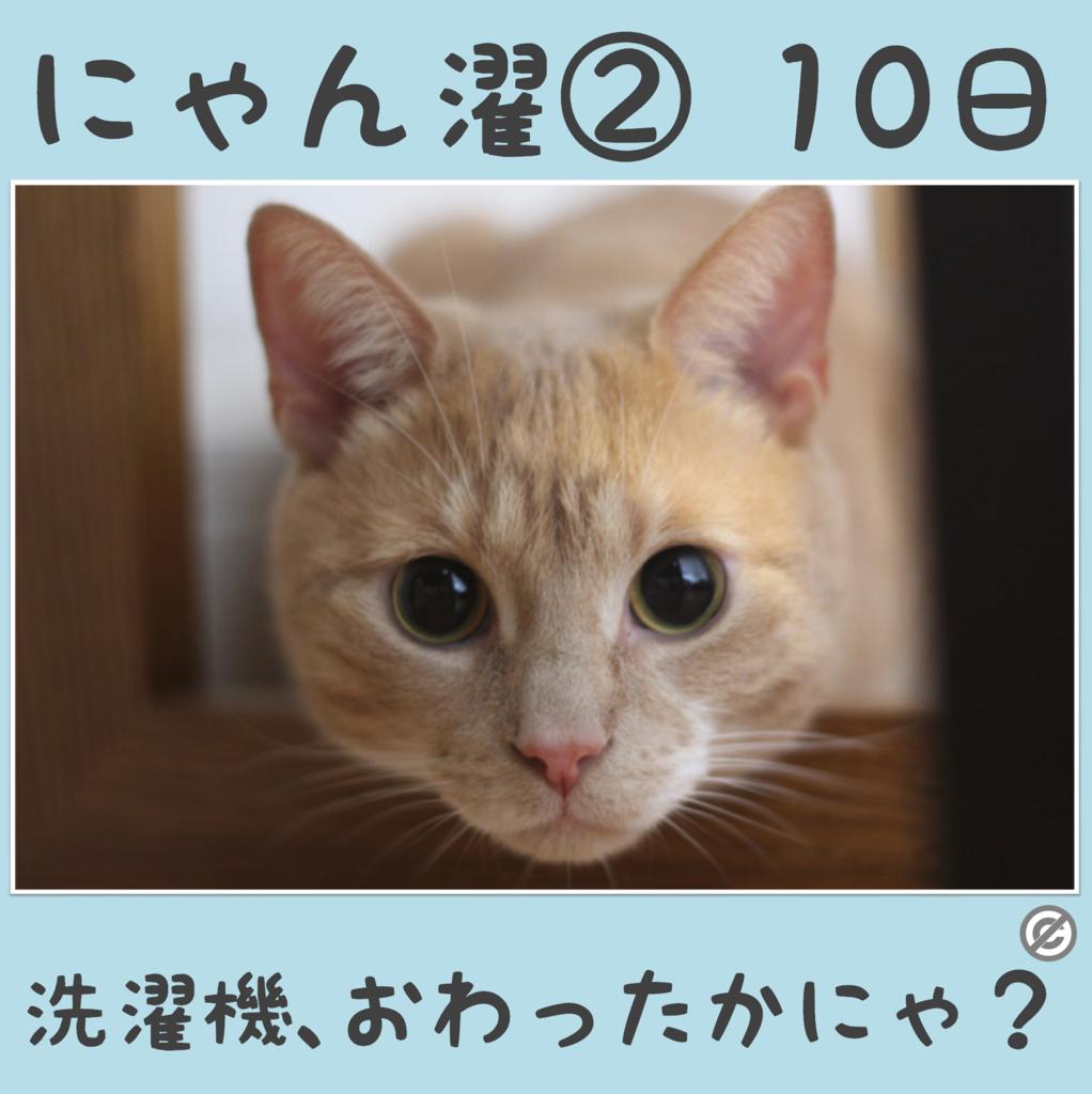 にゃん濯②(にゃんたく)10日
