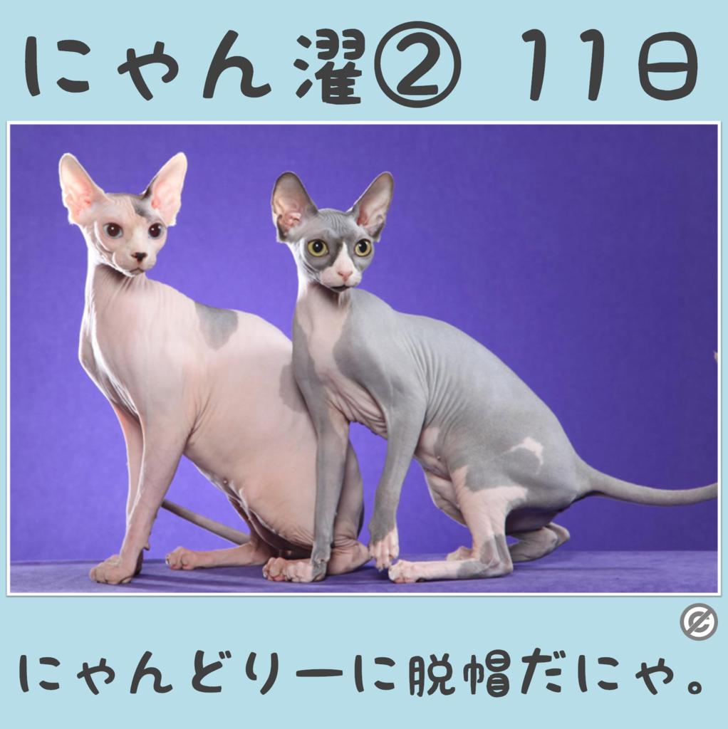 にゃん濯②(にゃんたく)11日