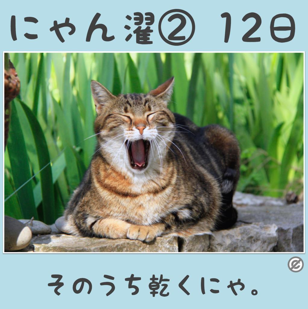 にゃん濯②(にゃんたく)12日