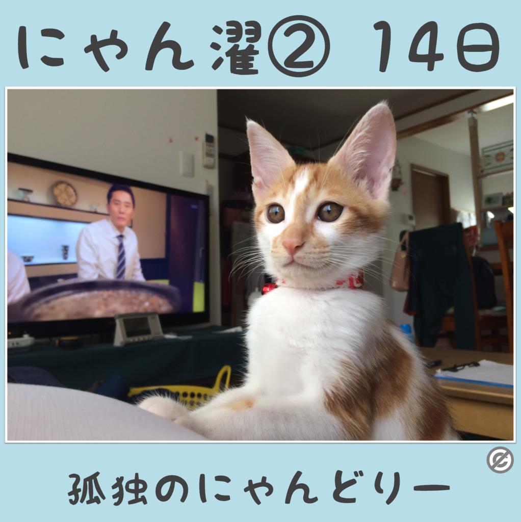 にゃん濯②(にゃんたく)14日