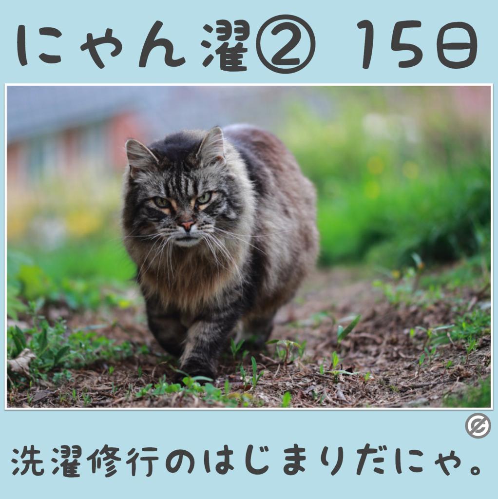 にゃん濯②(にゃんたく)15日