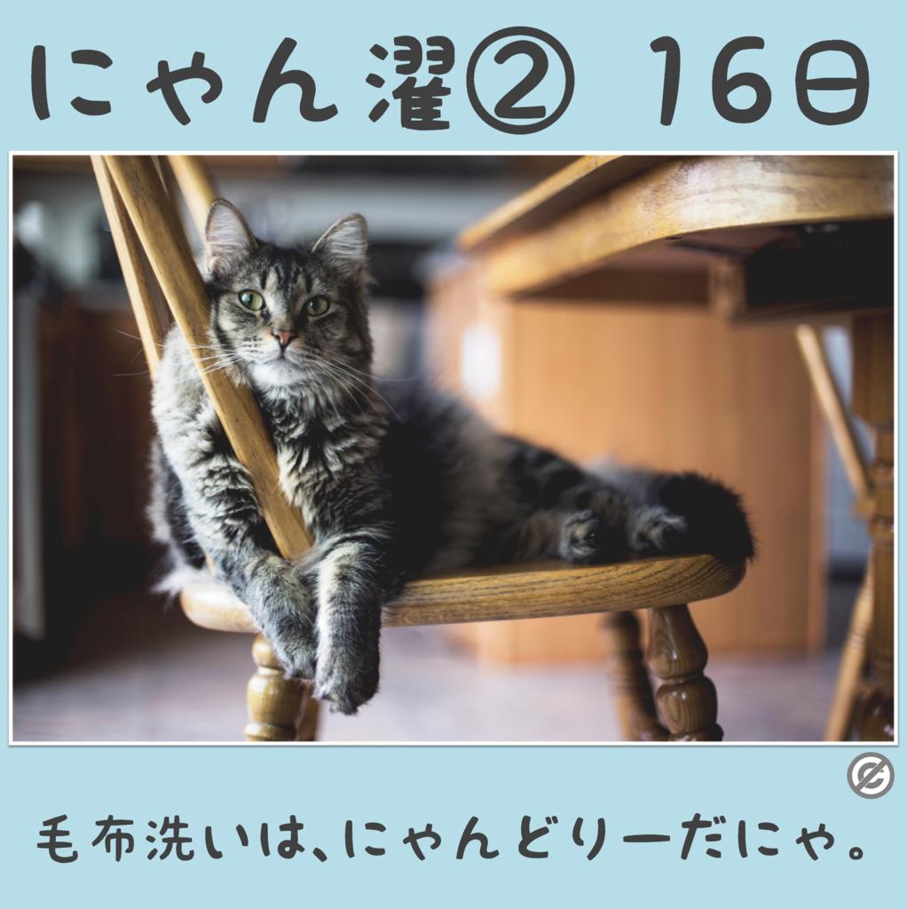 にゃん濯②(にゃんたく)16日