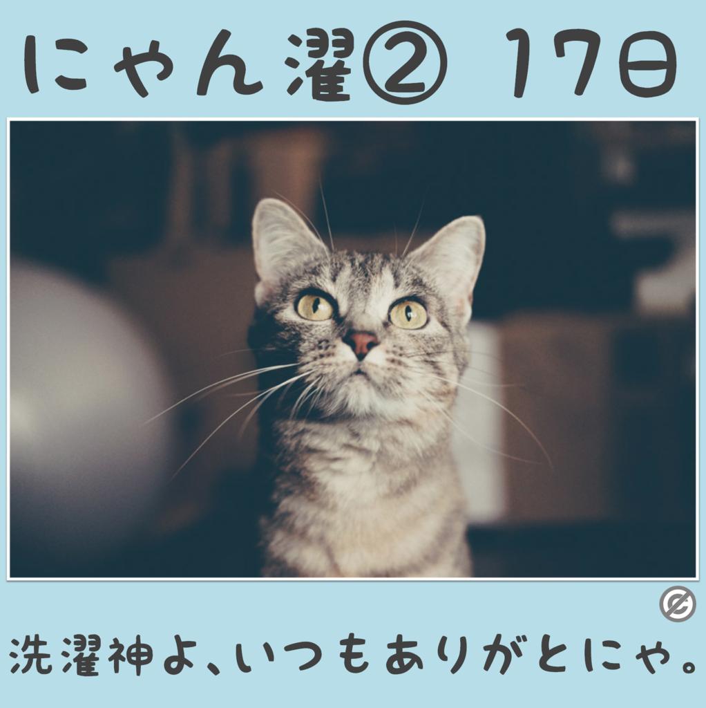 にゃん濯②(にゃんたく)17日