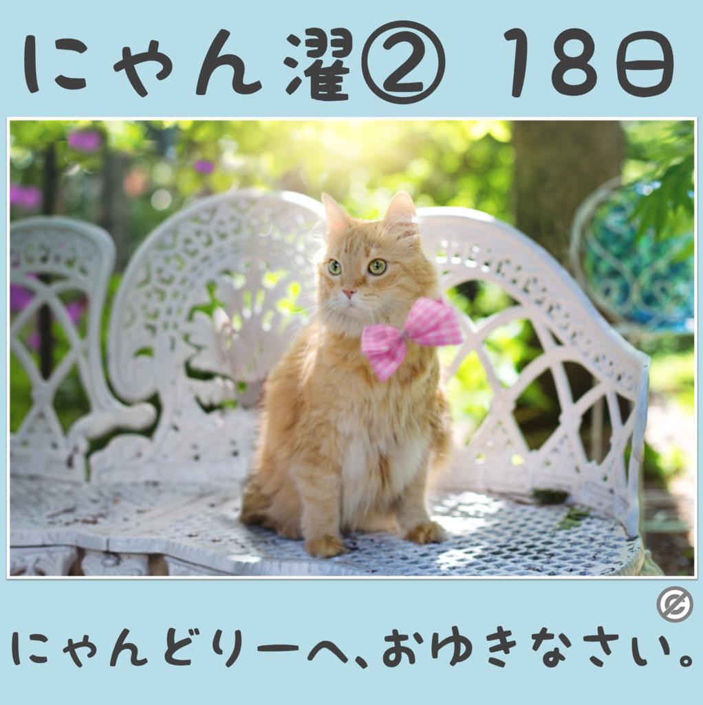 にゃん濯②(にゃんたく)18日