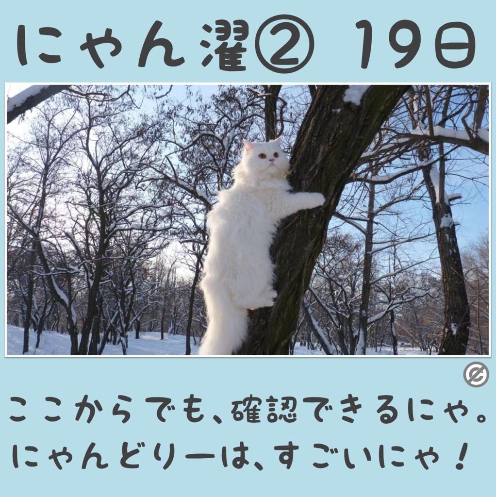にゃん濯②(にゃんたく)19日