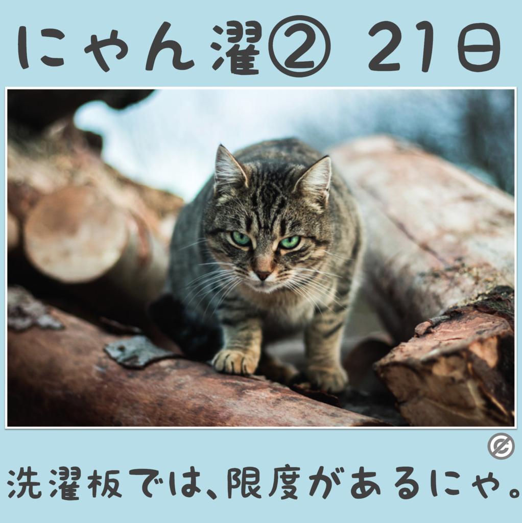 にゃん濯②(にゃんたく)21日