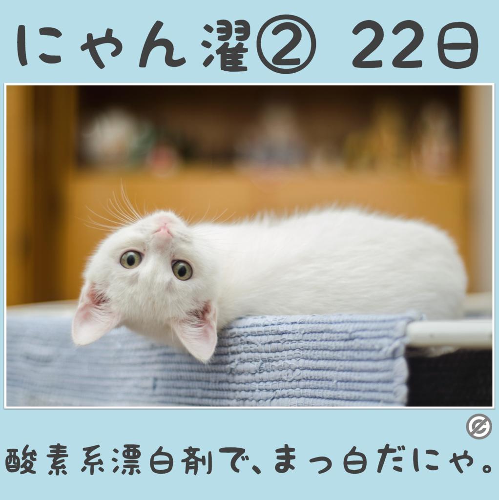 にゃん濯②(にゃんたく)22日