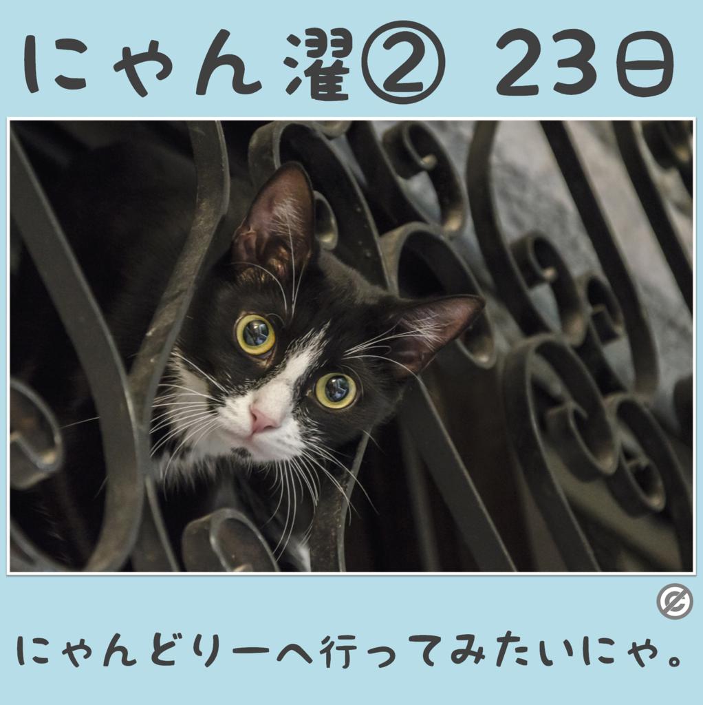 にゃん濯②(にゃんたく)23日