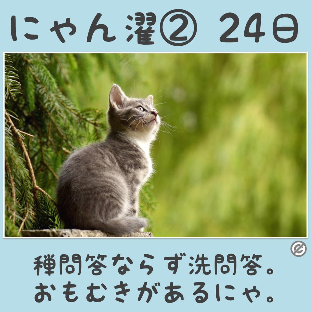 にゃん濯②(にゃんたく)24日