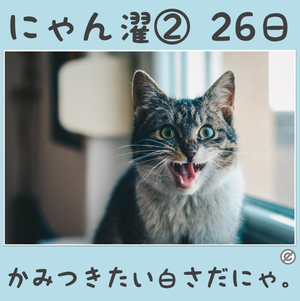 にゃん濯②(にゃんたく)26日