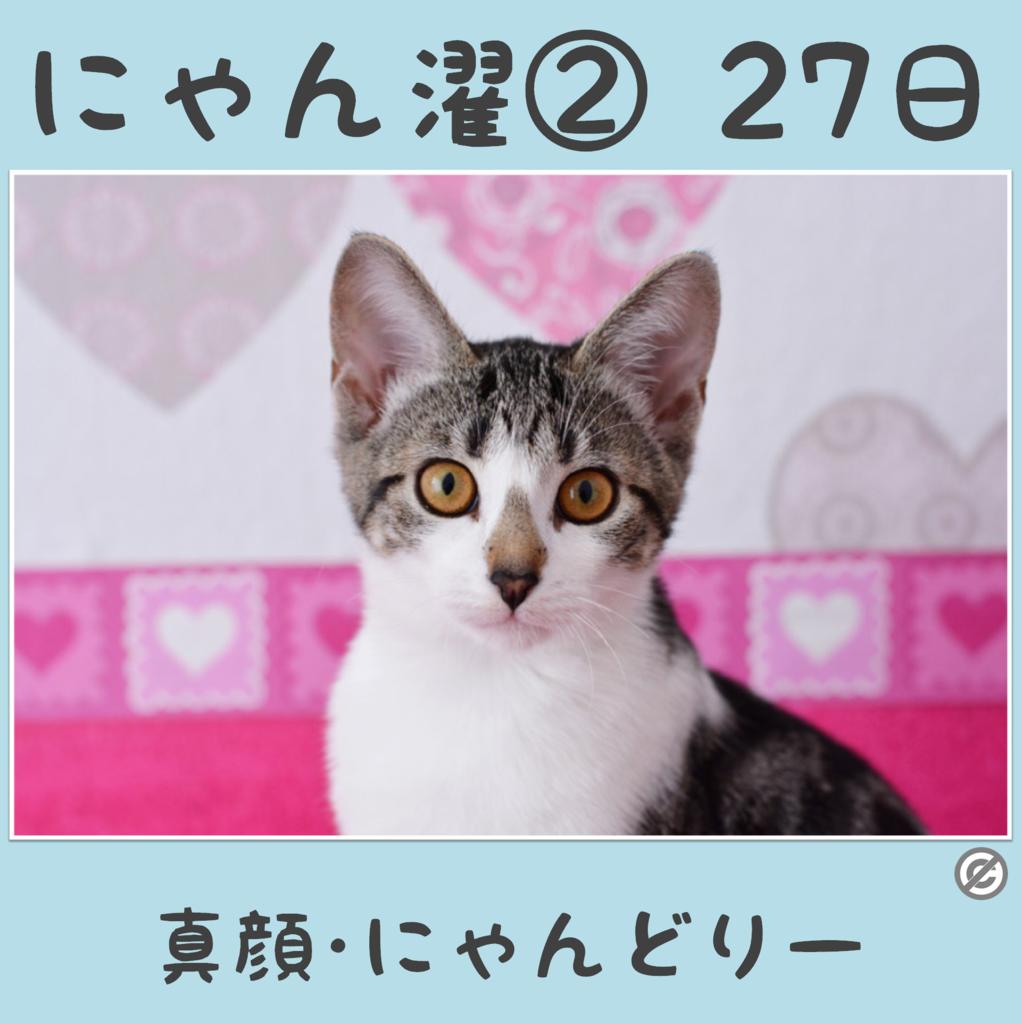 にゃん濯②(にゃんたく)27日