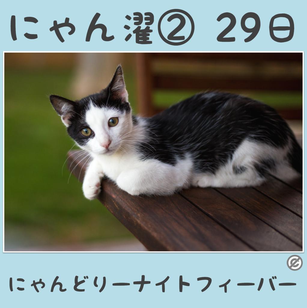 にゃん濯②(にゃんたく)29日