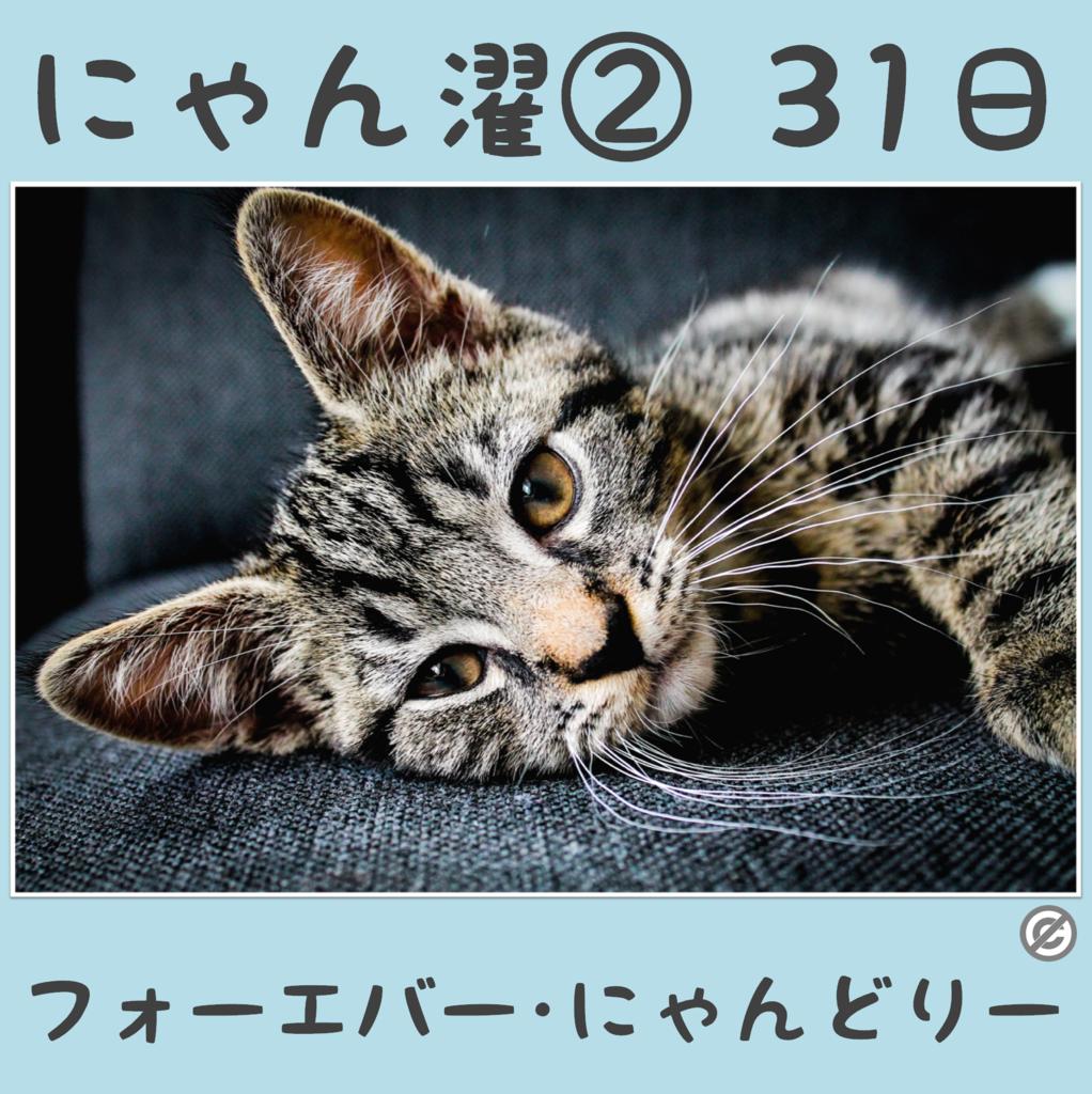 にゃん濯②(にゃんたく)31日