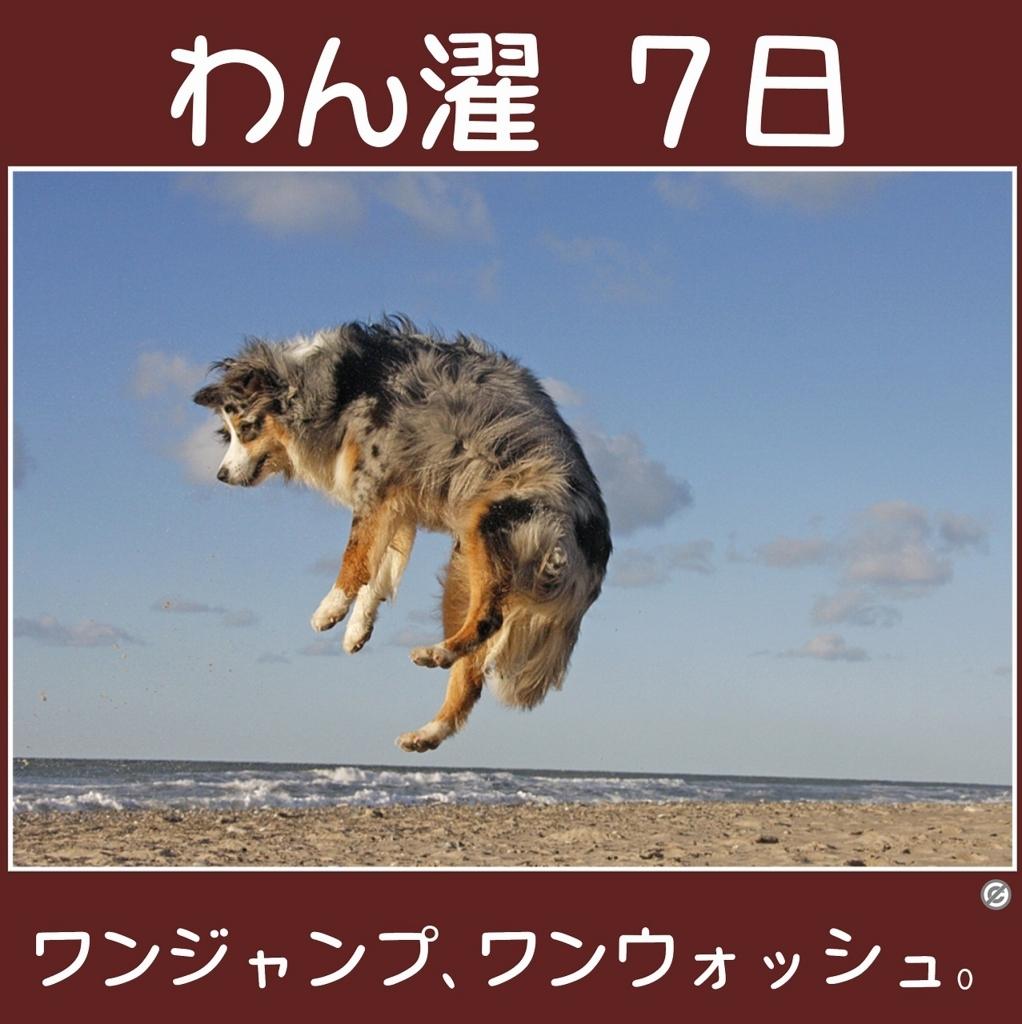 わん濯(わんたく)7日