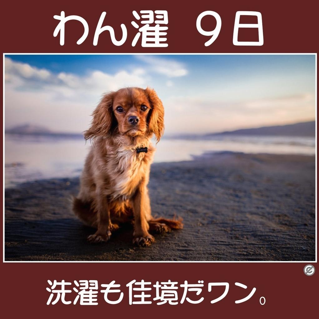 わん濯(わんたく)9日