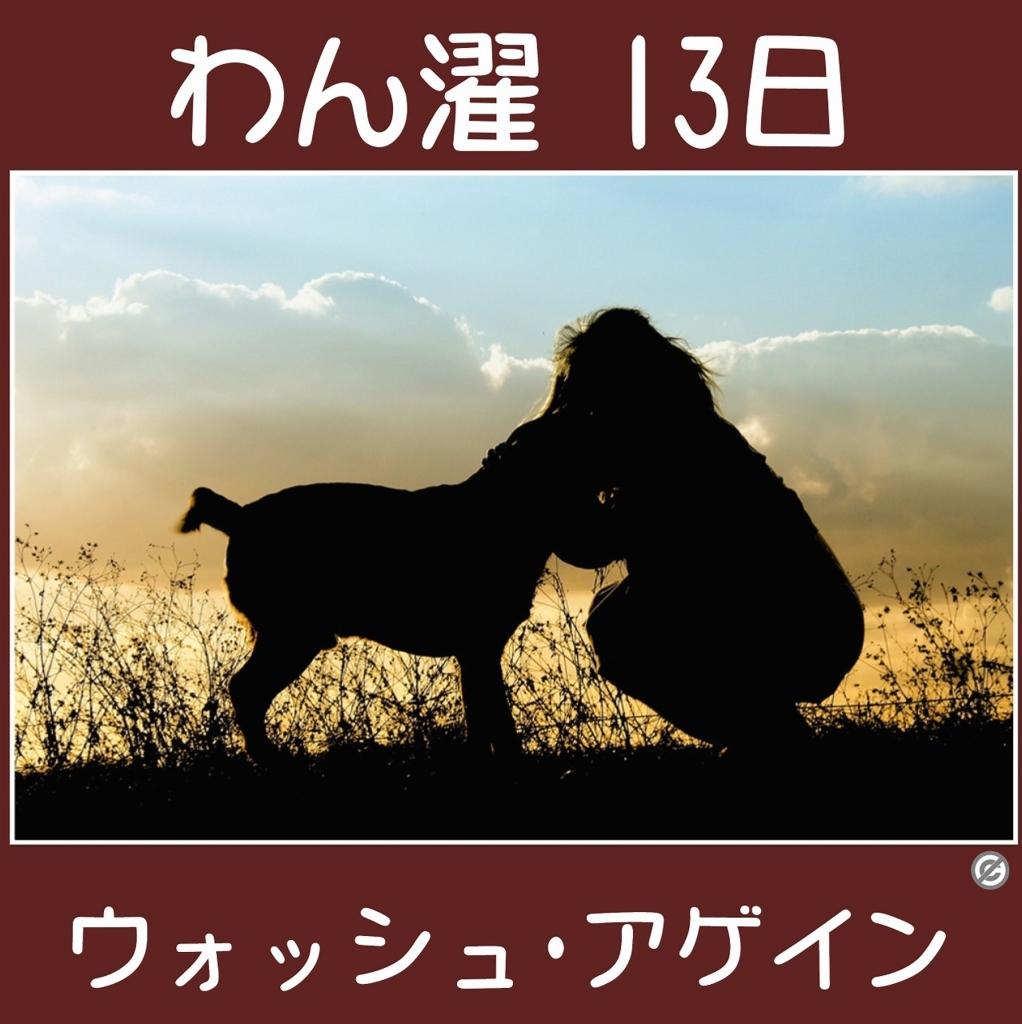 わん濯(わんたく)13日