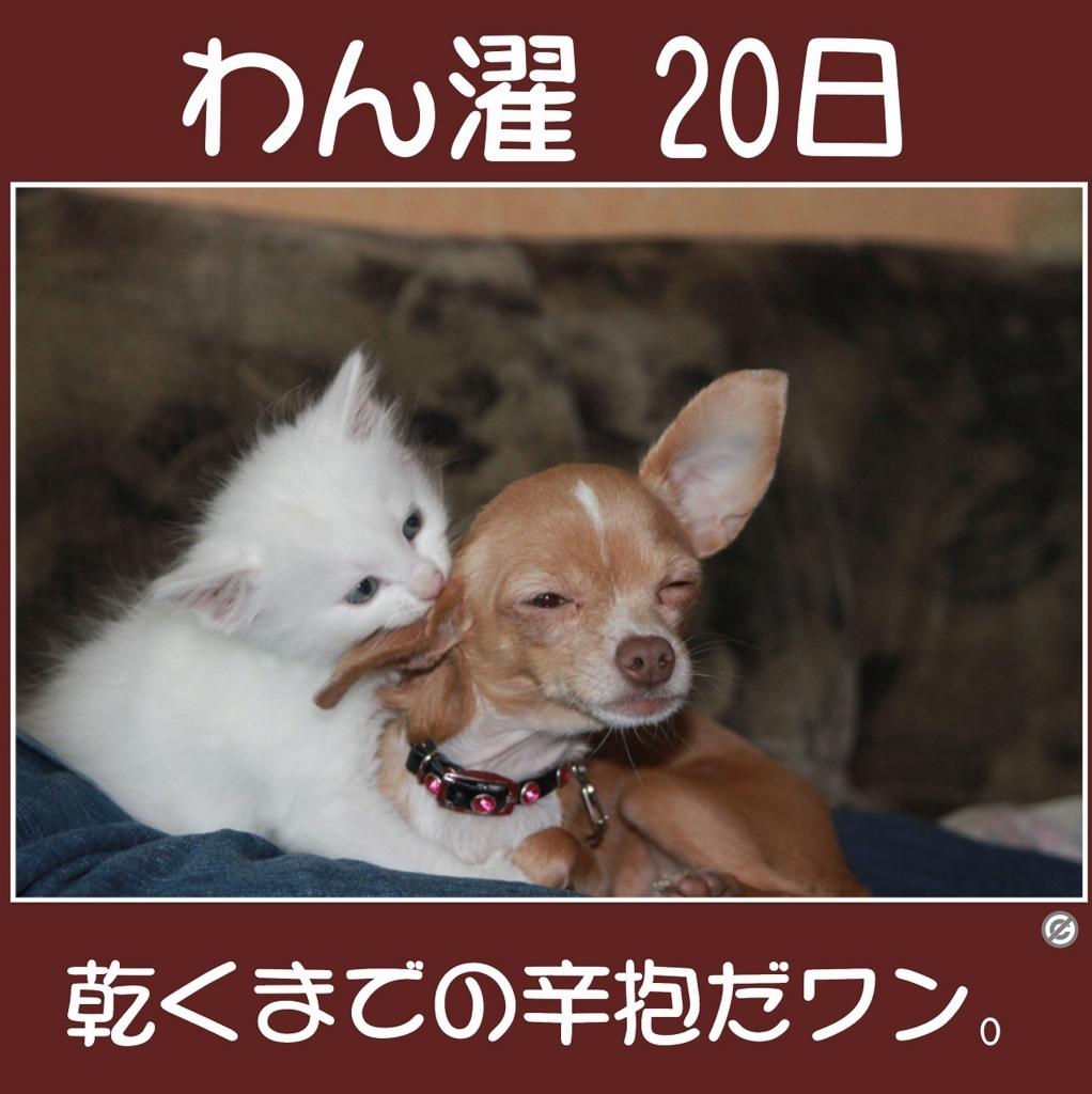 わん濯(わんたく)20日