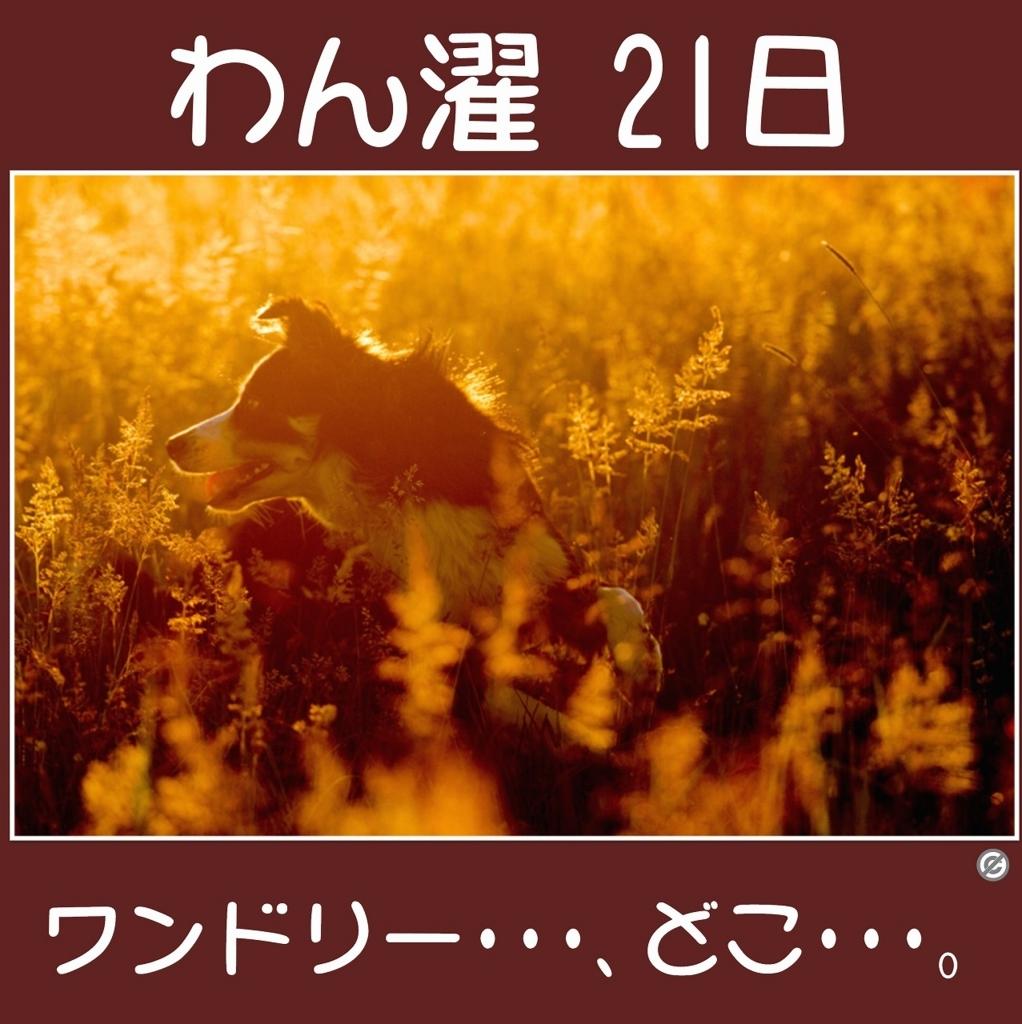 わん濯(わんたく)21日