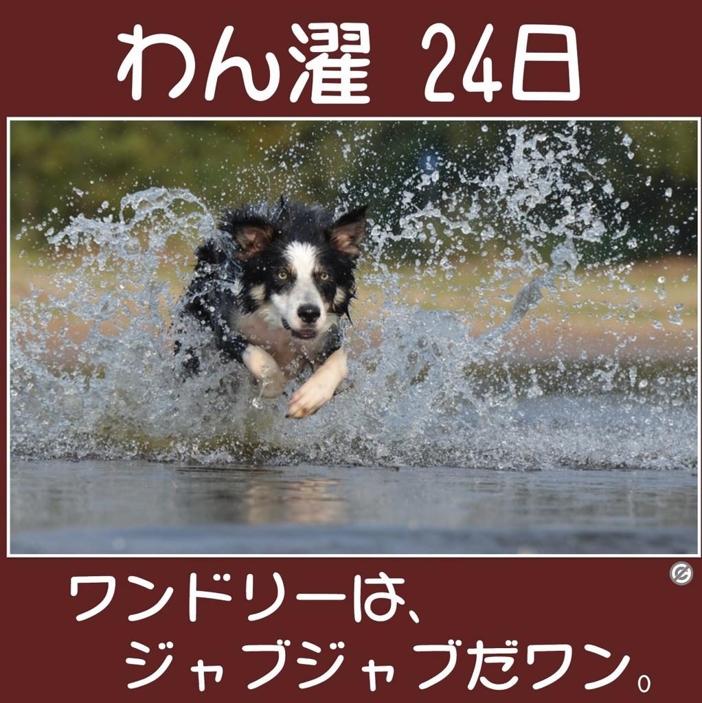 わん濯(わんたく)24日