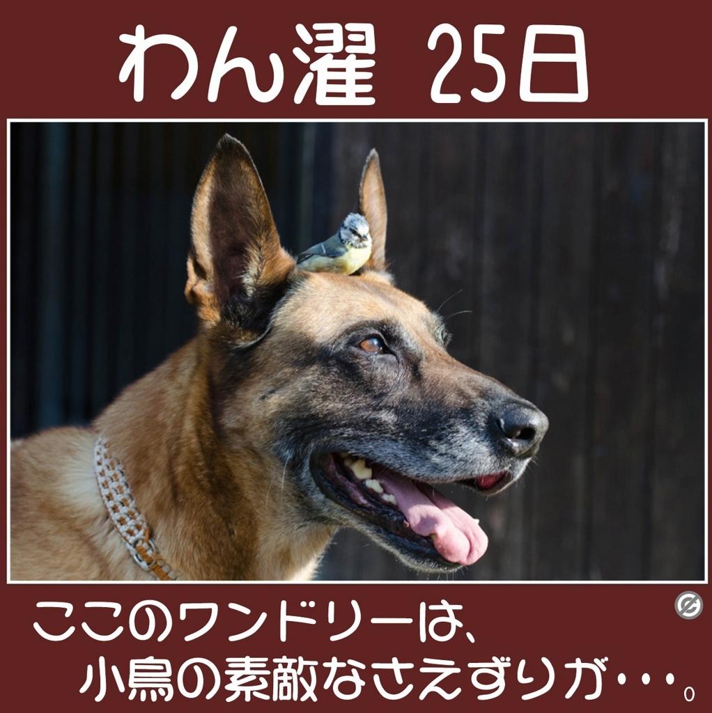 わん濯(わんたく)25日