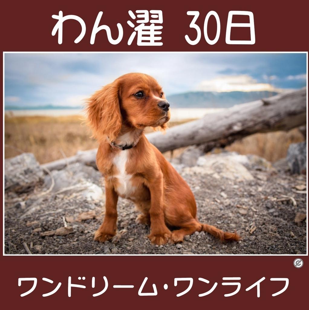 わん濯(わんたく)30日