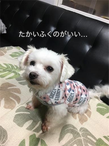 f:id:seori88:20191017194846j:image