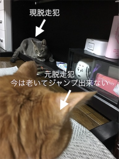 f:id:seori88:20191029194248j:image