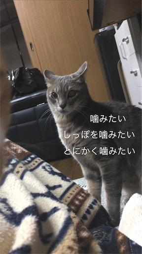 f:id:seori88:20200306224541j:image