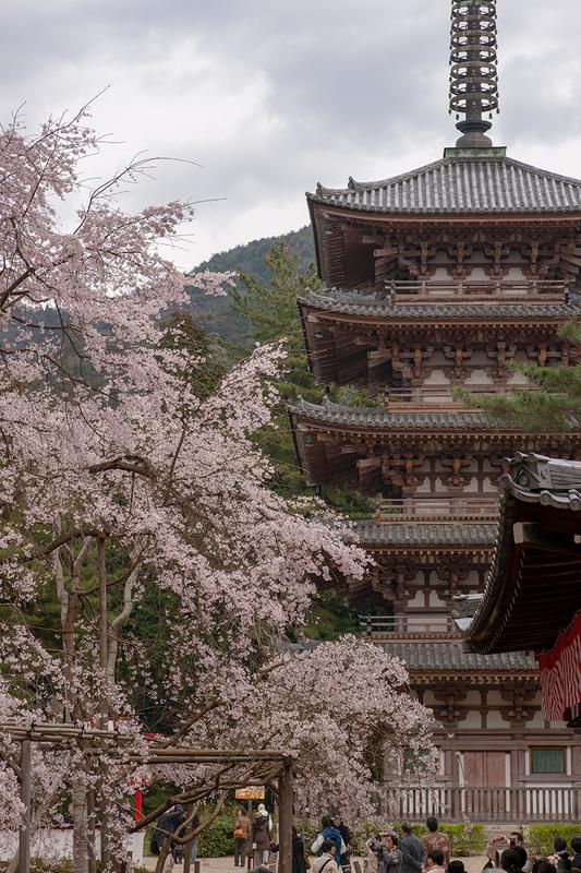醍醐寺の五重塔と満開の桜