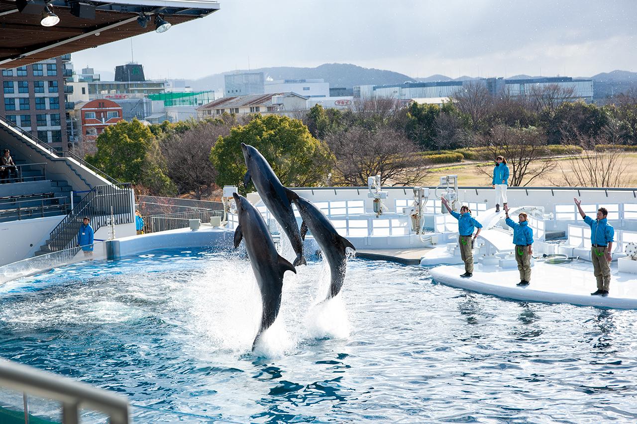 京都水族館のイルカショー