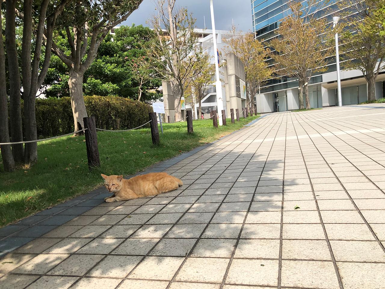 出田町ふ頭の野良猫
